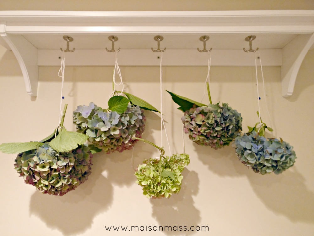 If these walls could talk drying hydrangeas