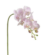 orchid pink parlane