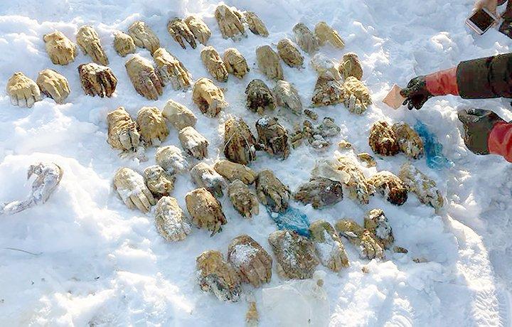Mais de vinte mãos encontradas em saco na Rússia