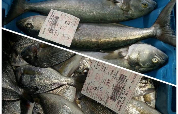 Cassa pescato