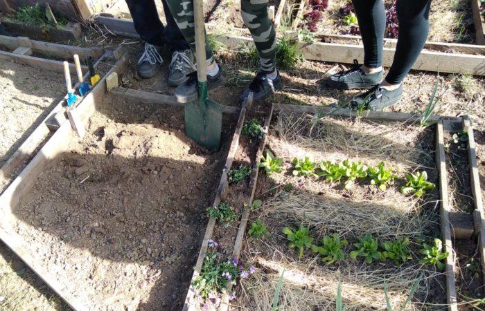 i ragazzi della 2° media Matteotti di Torino eseguono la manutenzione dei loro orti nel cortile della scuola