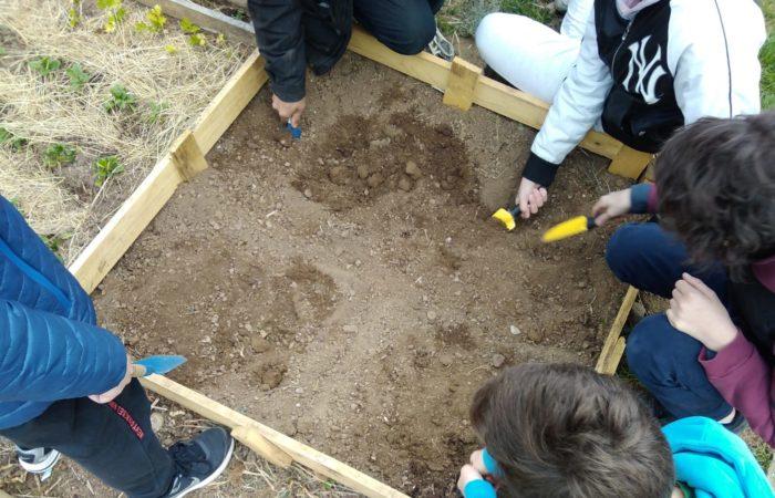 i ragazzi della 2° media Matteotti di Torino preparano una sezione dell'orto per mettere a dimora nuove piantine
