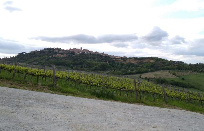 Visita all'azienda Manvi Wines di Montepulciano