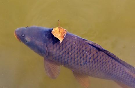 تفسير حلم رؤية السمك في منام المرأة المتزوجة