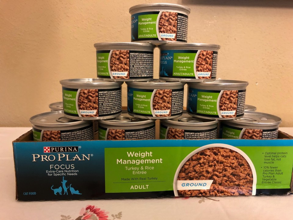 Purina Pro Plan Focus Cat Food #ChewyInfluencer