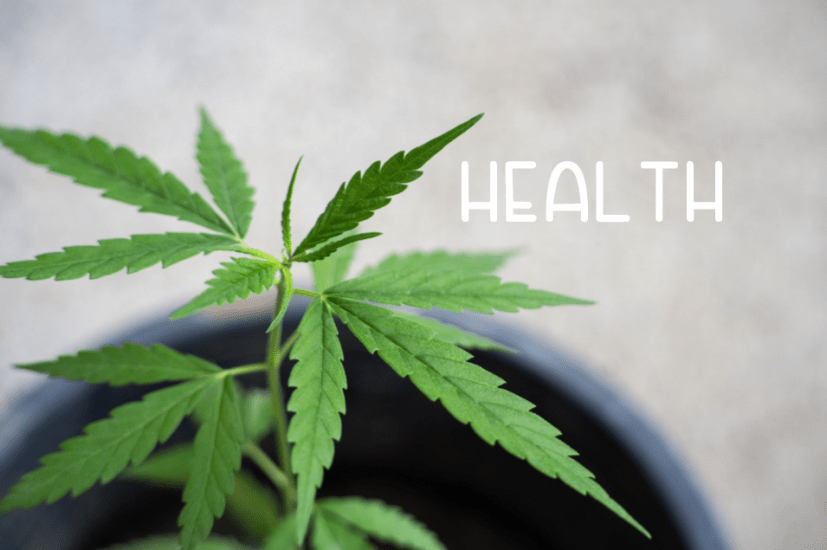 Health 2020 CBD Product Guide