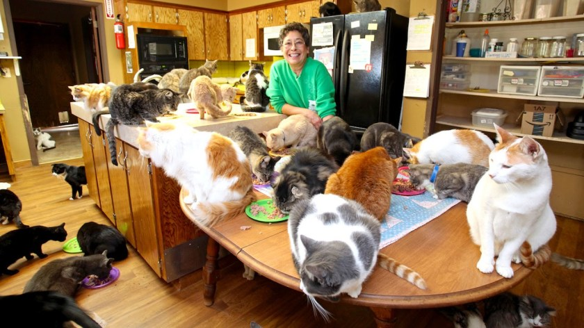 Image result for cat lady