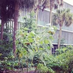 #sun #flower #Palm #Tree #instagood