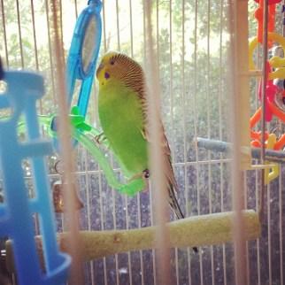 #instagood #bird
