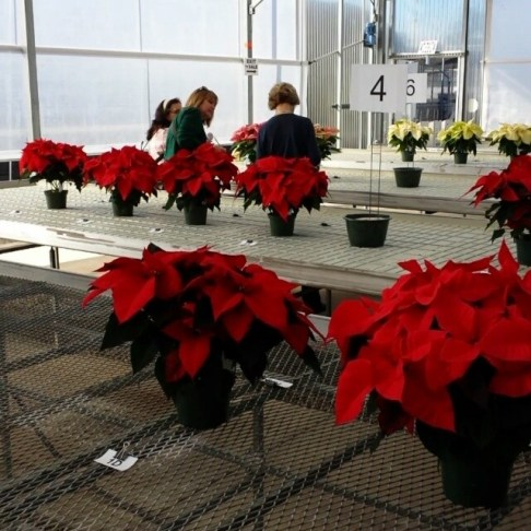 #shoppers taking #poinsettia #consumer #survey