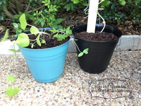small planters valspar