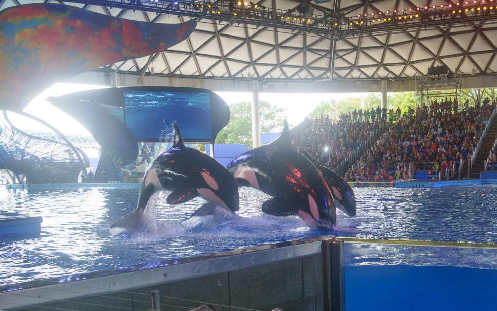 Sea-World-San-Antonio-Then-and-Now-Major-Hoff-Takes-A-Wife
