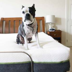 Dogs love LulaaBED mattresses