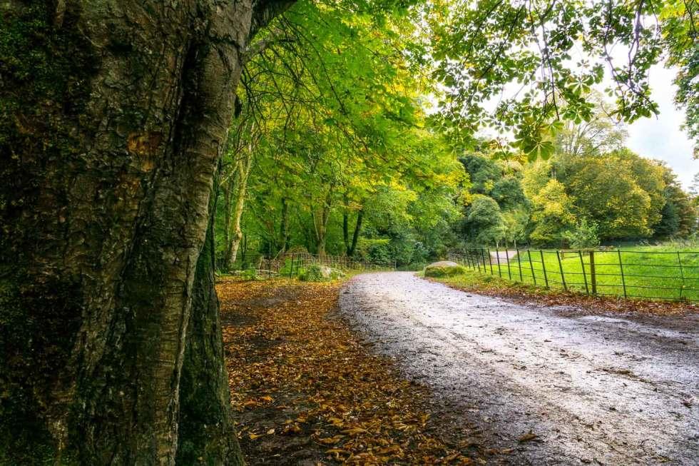 A walk in Killarney National Park leads you to quaint Irish roads.