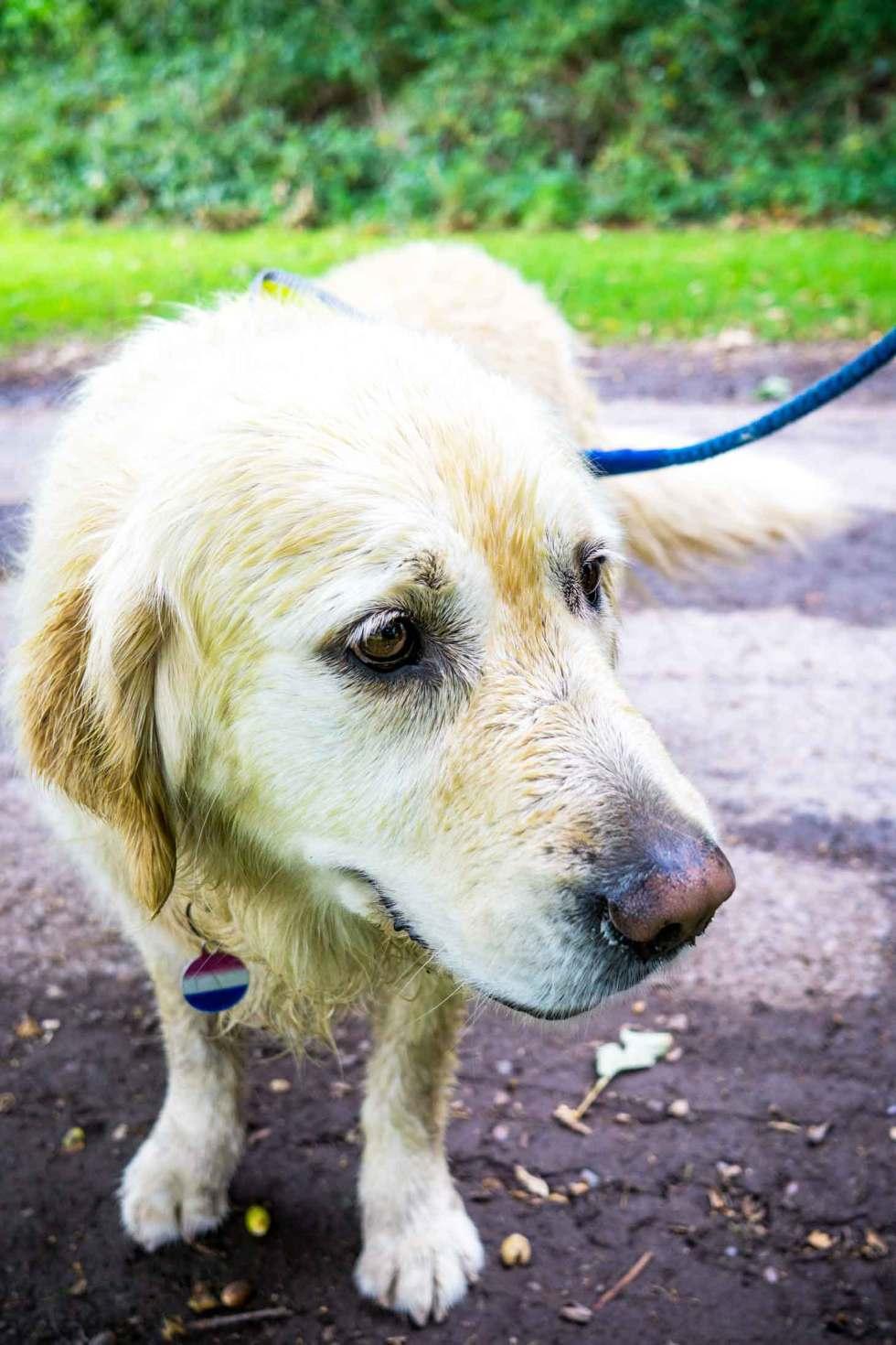dog walking in Killarney National Park