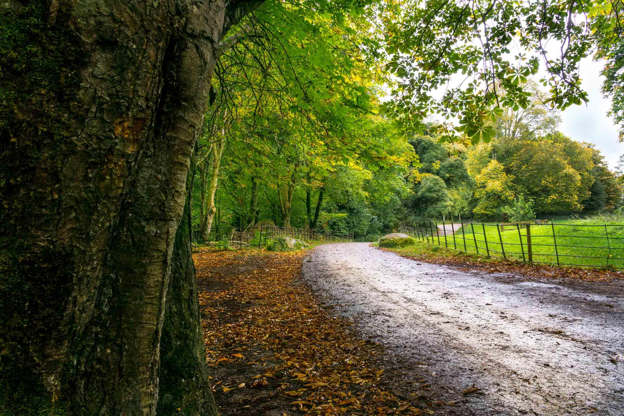 e7c5f8fe7124e Hiking in Ireland : Killarney National Park Walk - Major Hoff Takes A Wife  : Family Recipes & Travel Inspiration