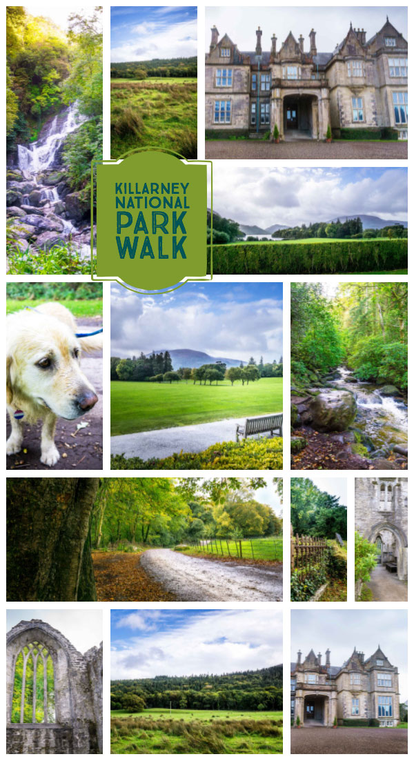 If you are thinking of hiking in Ireland, be sure to add a Killarney National Park walk to your list. You'll stroll by sites like Torc Waterfall, Muckross House, Muckross Abbey all while spying red deer, Kerry cows and more wildlife in the national park.