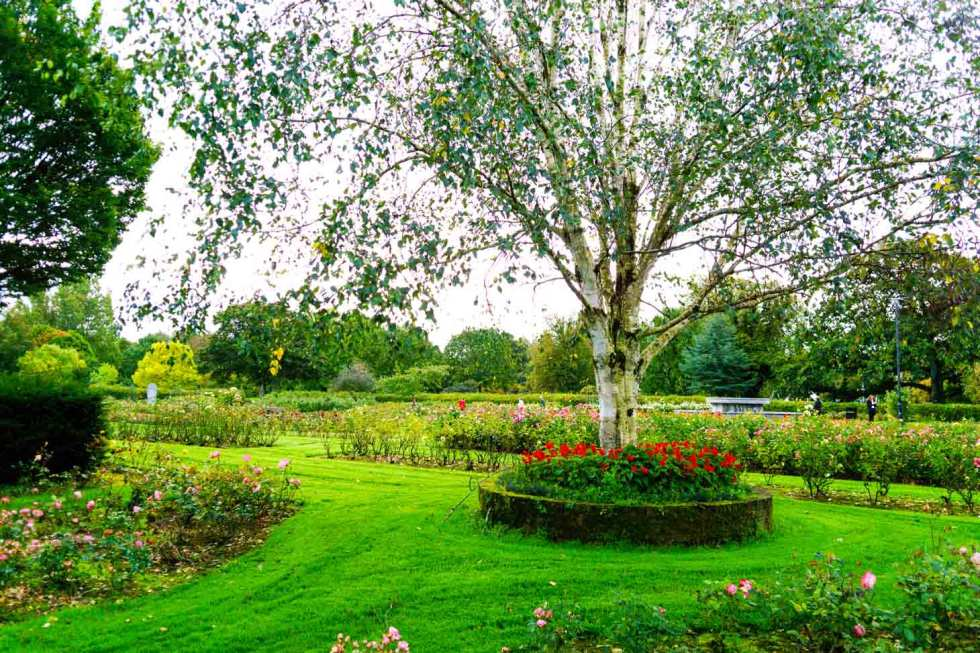 The Green is what locals call the Tralee Town Park home to a beautiful rose garden