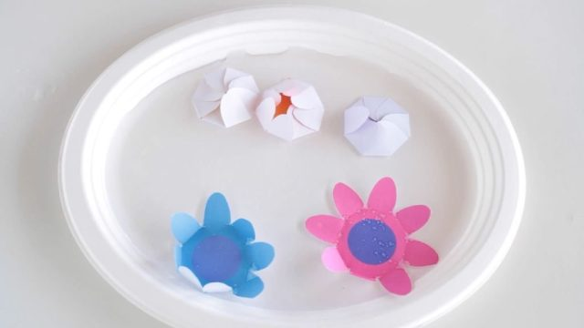 blooming-paper-flowers-add-to-water-1024x576