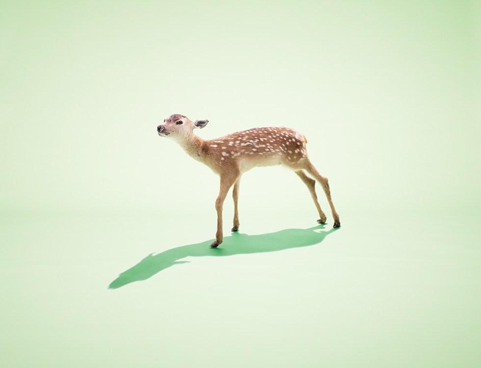 The Freaks - Deer