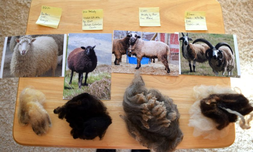 Show kids samples of raw wool from different breeds of sheep. Little House on the Prairie Party Ideas and Activities - MakeHardware.com