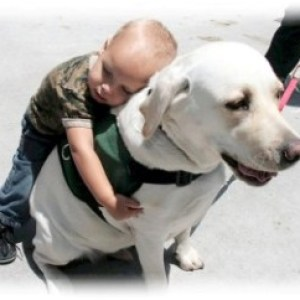 therapy-dog
