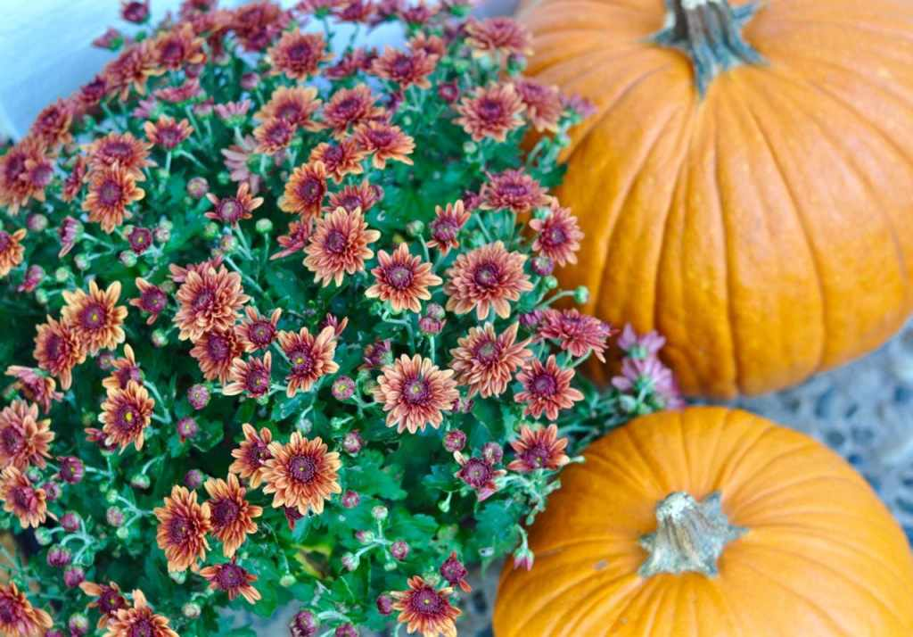 Fall front door makeover flowers and pumpkins