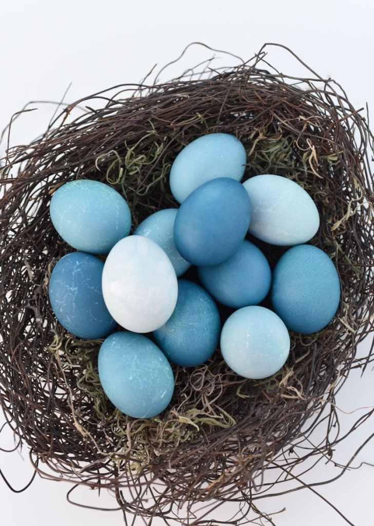 Dye blue Easter eggs with red cabbage
