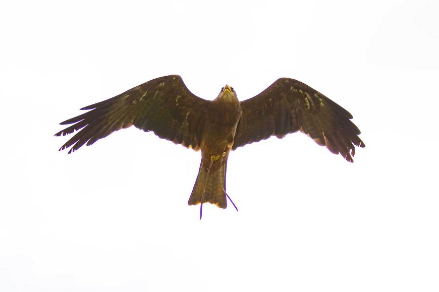 National Centre for Birds of Prey Helmsley North Yorkshire