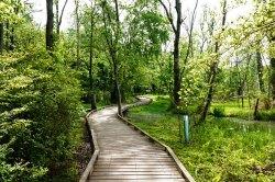 Path at Conestee Nature Preserve.
