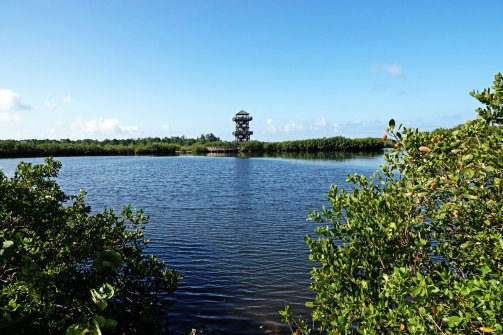 View of the observation tower at Robinson Preserve.