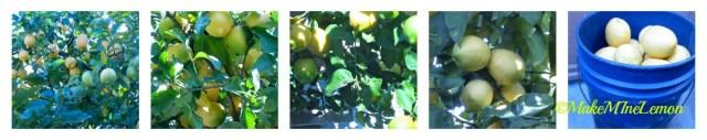 Cured Lemons