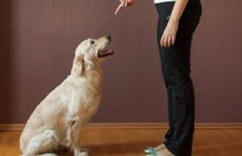 A person pointing at a dog