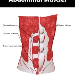 abdominal muscle anatomy chart you can download and print  [ 2550 x 3300 Pixel ]
