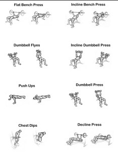 Free chest exercise chart you can print also rh makeoverfitness