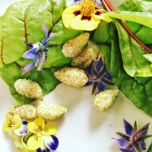 Using edible flowers
