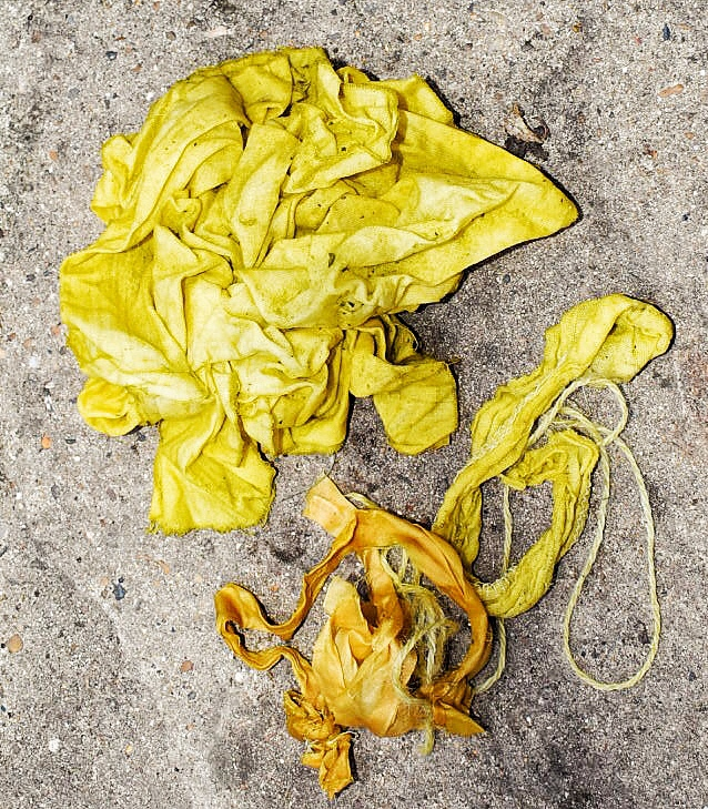 tagetes minuta dyed for drying