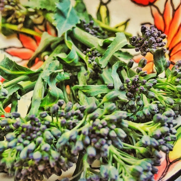 Growing and harvesting sprouting broccoli