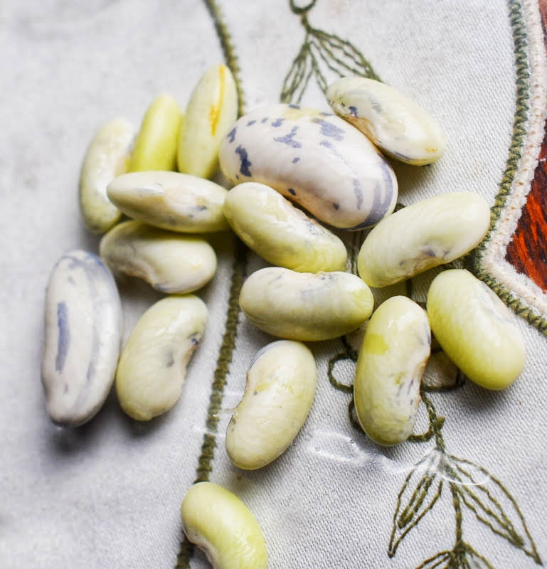 growing and harvesting borlotti beans