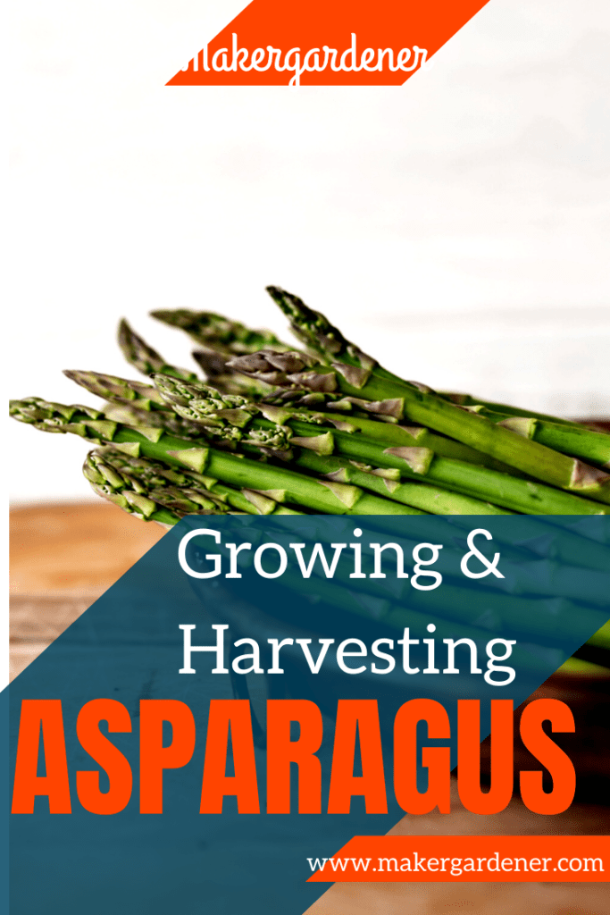 Growing and harvesting asparagus