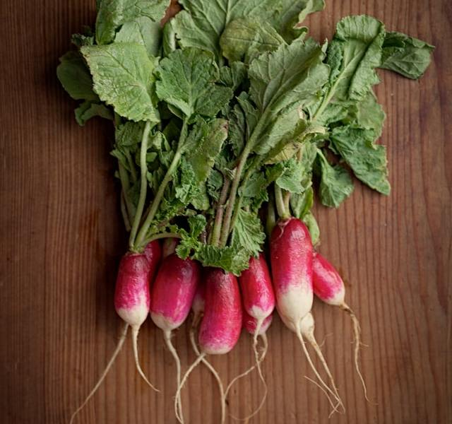 Growing and harvesting radish at home