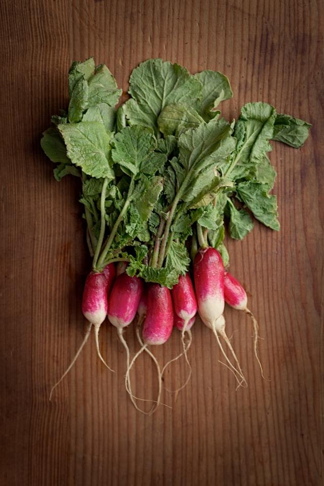 Growing and harvesting radish