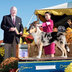 Official photo from Old Dominion Kennel Club Ch Special SuckerPunchedhellip