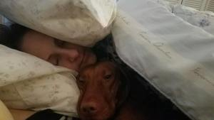 Happy to be back in my own bed vizsla vizslalovehellip