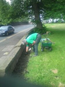 Public Planting