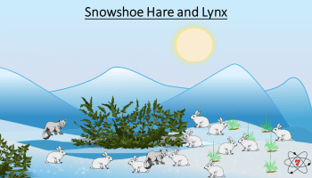 Snowshoe hares and lynxes share are ecologically linked to each other. What affects one population will affect the other.