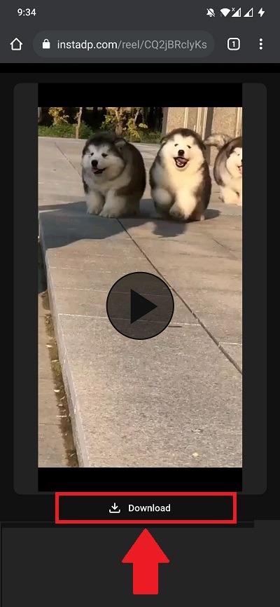 Save Reels Video