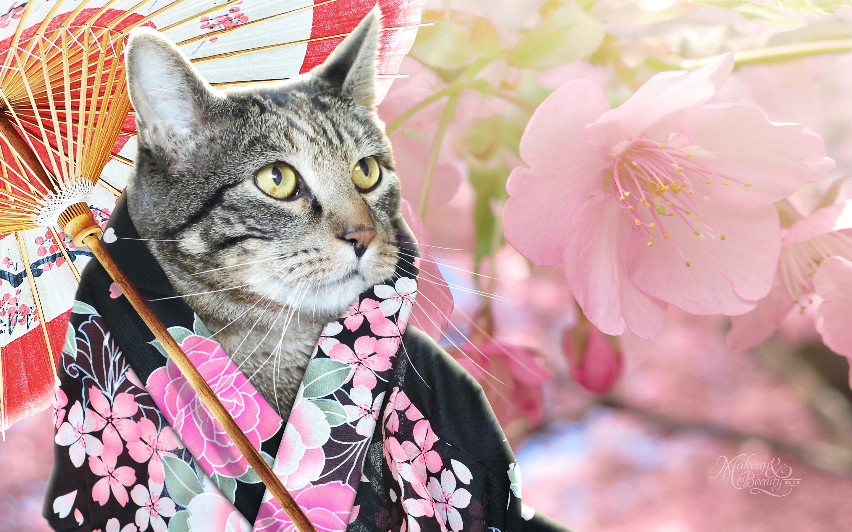Makeup Iphone Wallpaper Sundays With Tabs The Cat Makeup And Beauty Blog Mascot