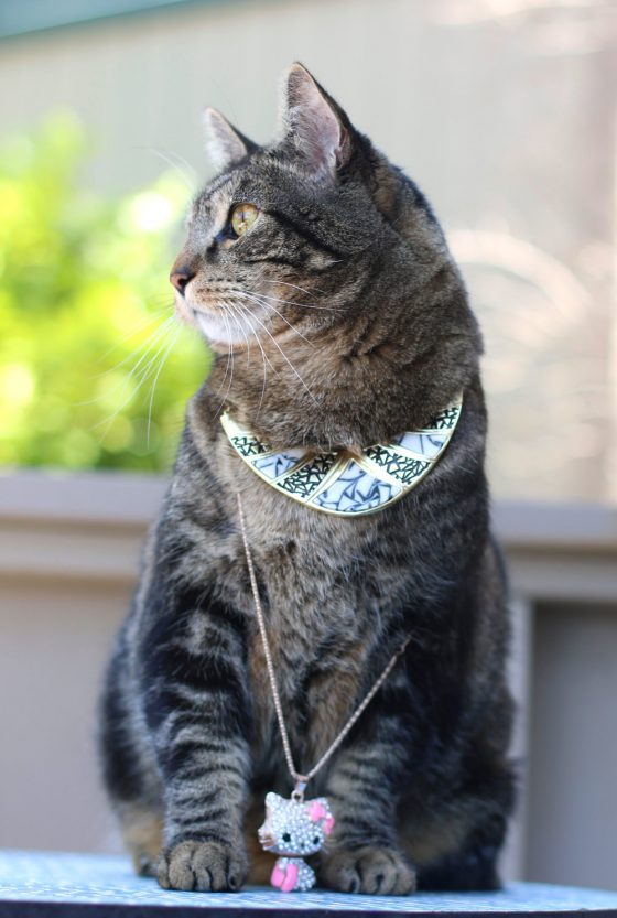 tabs-cat-jewelry-summer-2016-1