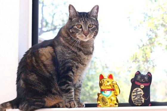 tabs-cat-jewelry-summer-2016-5